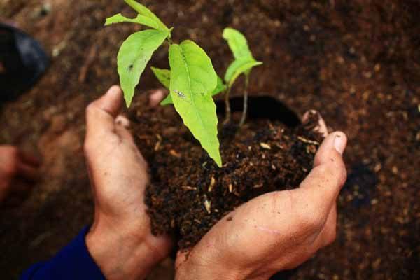 แนวคิดการปลูกป่าที่สำคัญ คำสอนจากพ่อของแผ่นดิน