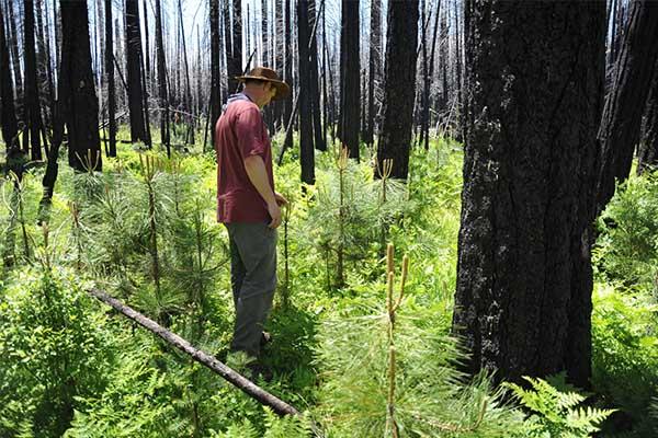 แนวคิดดีๆ รักษาป่าไม้และปลูกจิตสำนึกให้กับคนรุ่นใหม่